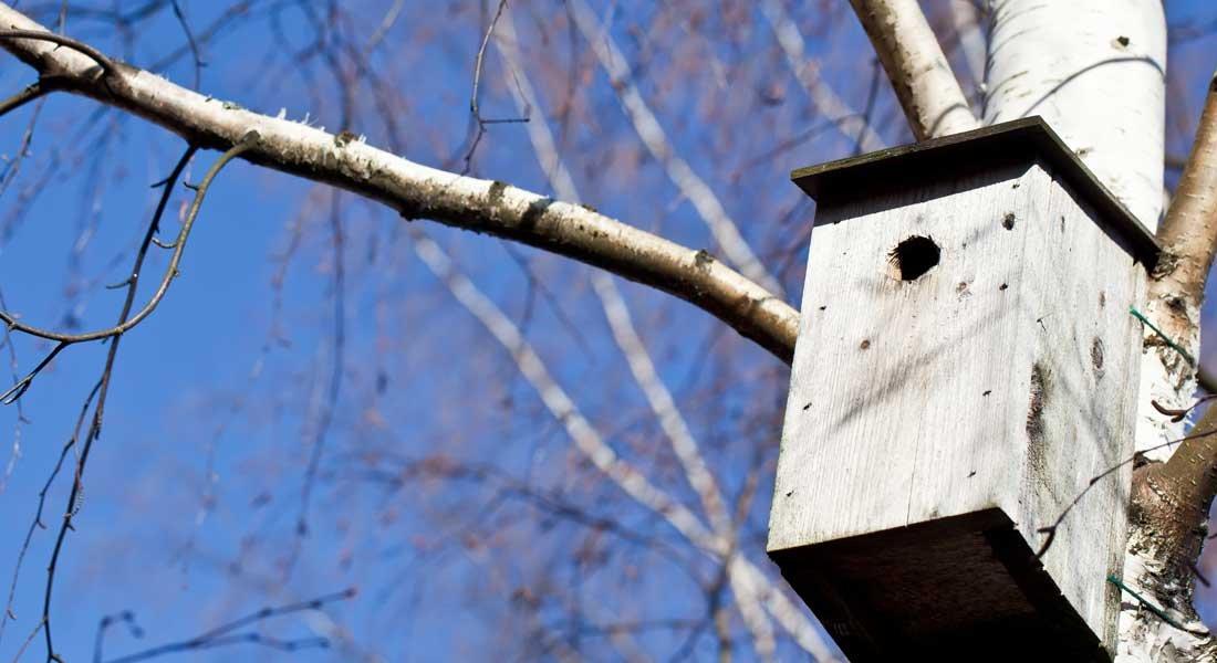 Lintujen asuntomarkkinoilla on vilskettä