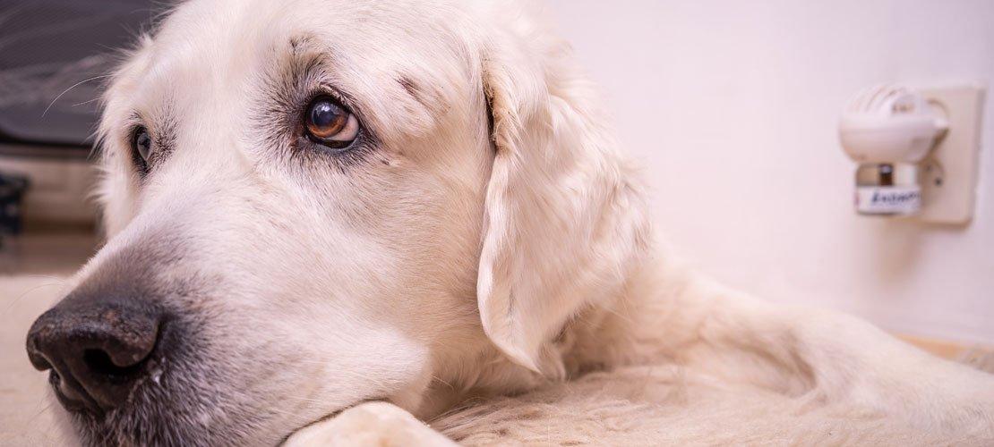Paukkuarka koira tarvitsee tukea