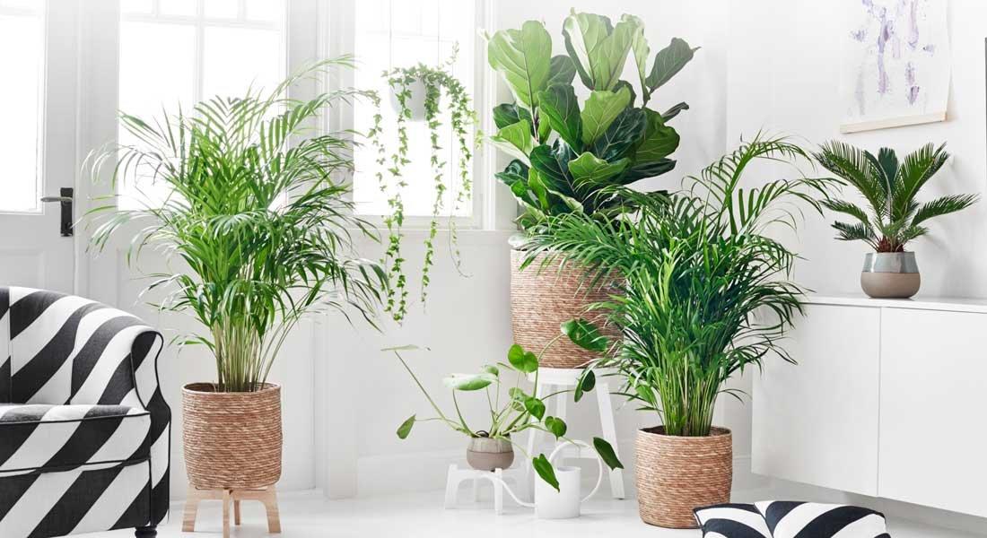 Hämärän aika koettelee kasveja
